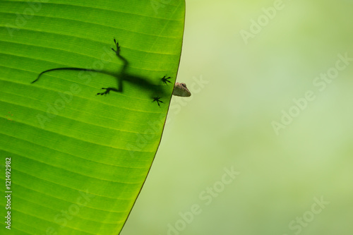 Photo Stands Nature Anole