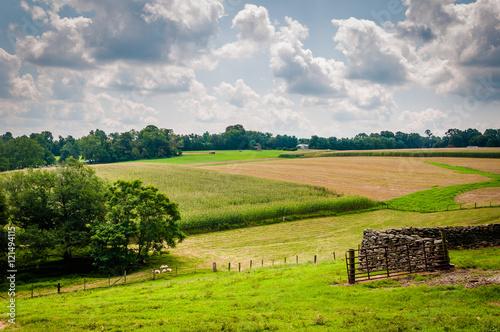 Foto op Plexiglas Groene Summer view of farm fields in rural Baltimore County, Maryland.
