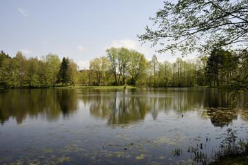 Fototapeta na wymiar Waldsee im Sonnenschein