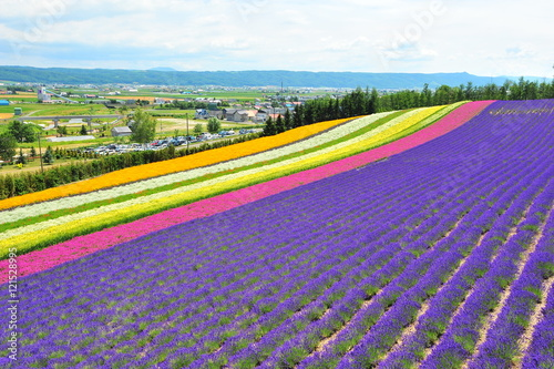 Poster Panoramafoto s Flower Fields in Hokkaido, Japan