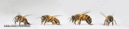 Photo sur Toile Bee abeille