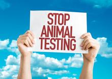 Stop Animal Testing Placard Wi...