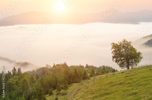 Tuinposter Olijf Morning fog in the mountains. summer landscape with fir forest on mountain slopes. Color toning. Low contrast.