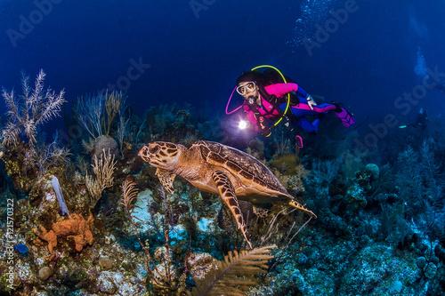 Fotografie, Obraz  SCUBA Diver Sally