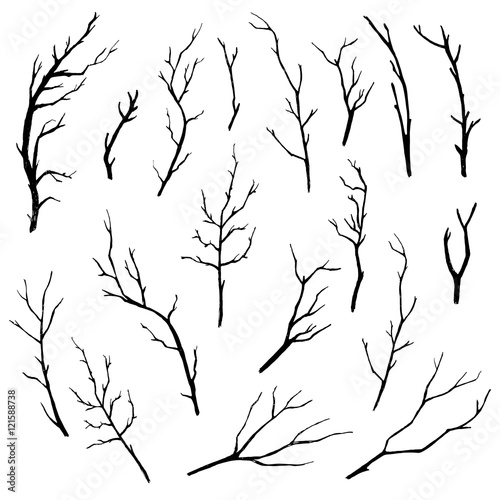 Obraz na płótnie Hand drawn tree branches collection. Vector illustration.