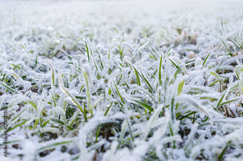Foto-Schiebegardine ohne Schienensystem - Green grass field covered with frost.