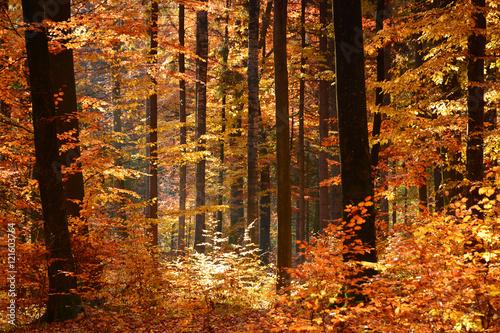 Autocollant pour porte Orange eclat Autumn forest