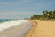 красивый пляж шри-ланка. берег океана песок пальмы,