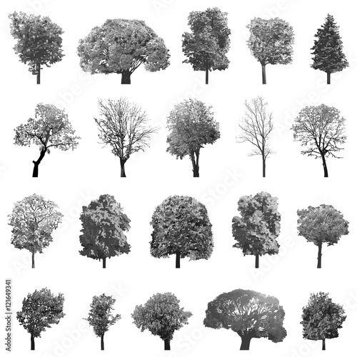 Fotografía vector set of isolated trees in grey scales