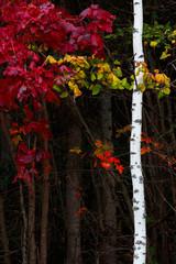 Fototapeta Jesień Autumn forest foliage bright colorful background