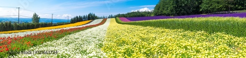 Tuinposter Zwavel geel Panorama view of colorful flower field in the summer of Hokkaido, Japan