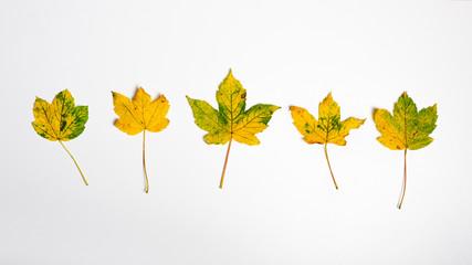 Jesienne żółte liście tło panoramiczne