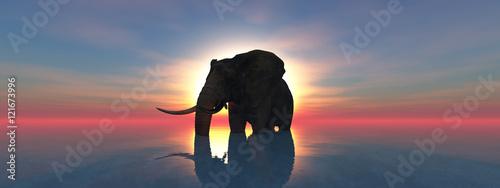elephant and sunset Tapéta, Fotótapéta