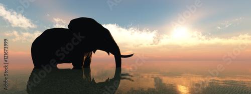 Vászonkép elephant and sunset