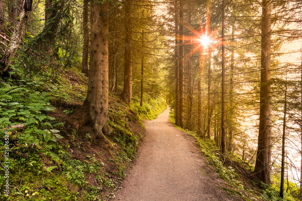 Fototapeta Walking path in forest at morning with beautiful sunbeams.