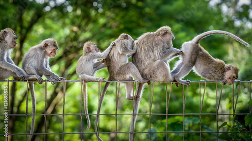 Photo sur Toile Singe All Lined Up