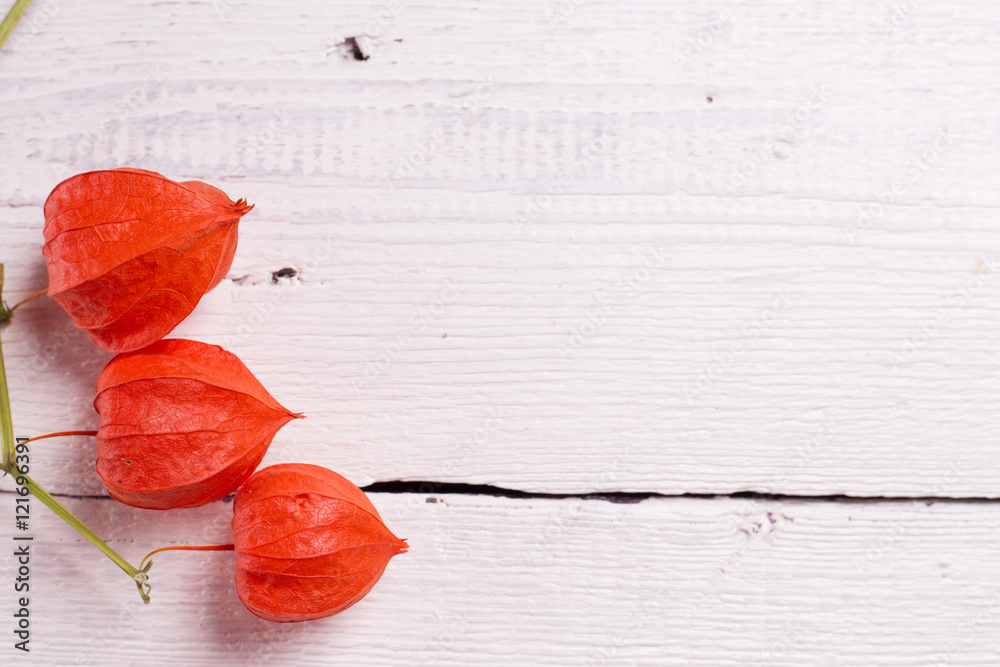 Red physalis and card for your text