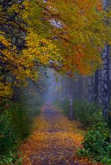 Fototapetafoggy morning park sidewalk in the autumn