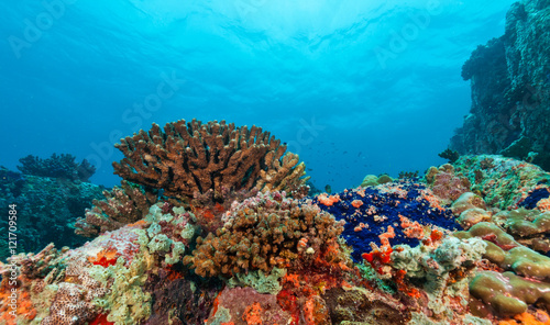 Tuinposter Onder water Underwater coral reef background