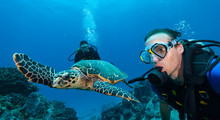 Scuba Divers With Hawksbill Turtle