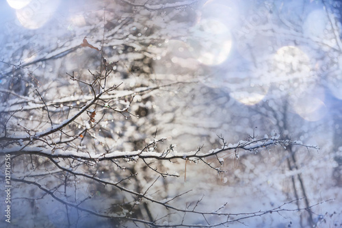 Photo Stands Dark grey Frozen tree