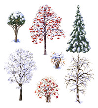 Winter Trees And Shrubs