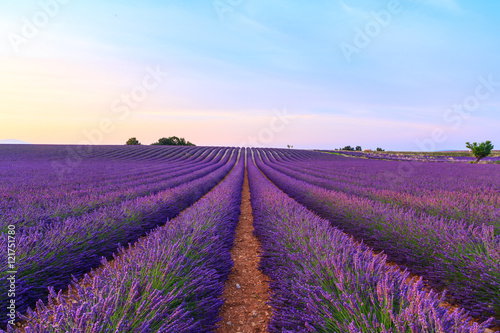 Poster Prune Stunning landscape with lavender field at sunset
