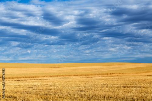 Foto op Plexiglas Platteland Wheat fields and clouds in Billings, Montana.