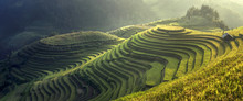 Beautiful Rice Terraces Mu Cang Chai,Yenbai,Vietnam.The Symbol