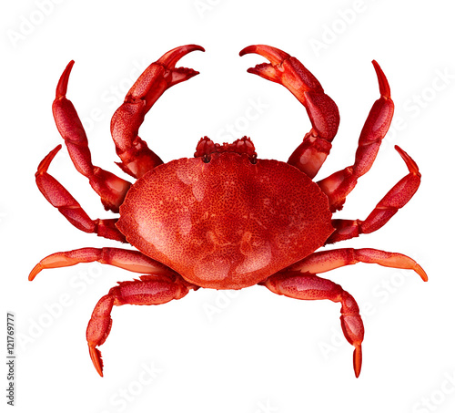 Crab Isolated Canvas Print