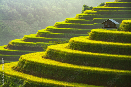 Garden Poster Rice fields Rice terrace Mu Cang Chai Vietnam