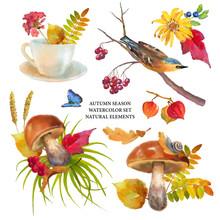 Autumn Watercolor Natural Coll...