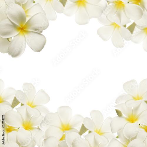 frangipani (plumeria), white flowers on white background