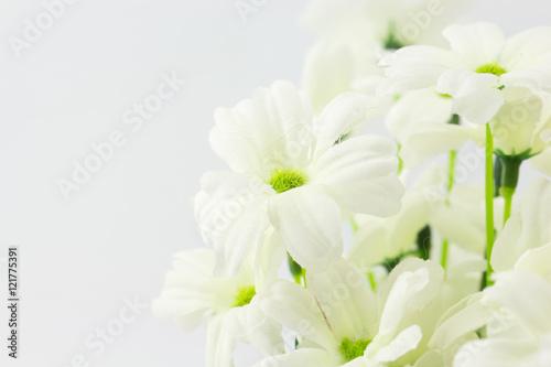 Poster de jardin Nénuphars Artificial flower white background