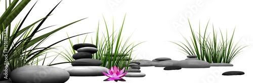 Fototapeta Trawa i kamienie z różową lilią wodną  obraz
