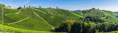 Spoed Foto op Canvas Pistache Weinberge in der Steiermark unter blauem Himmel