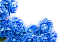 Background With Blue Roses Iso...