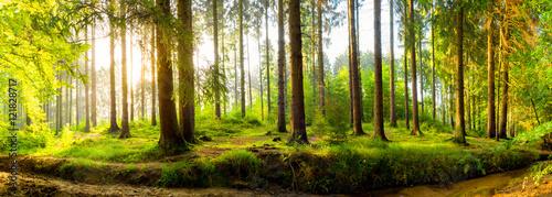 Fototapeta Panorama lasu o wschodzie słońca na zamówienie