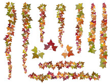 Set Of Autumn Vector Ivy Branc...