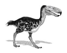 Kelenken - Large Prehistoric B...