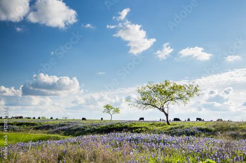 Poster Texas Texas Bluebonnet filed and farmland in Ennis