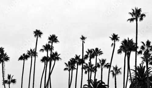 Photo Santa Monica Palms