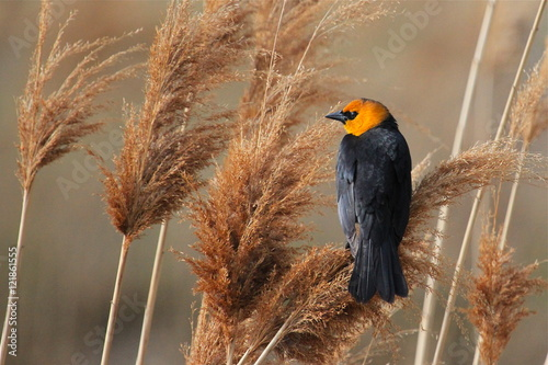Bird Perching On Tall Grass