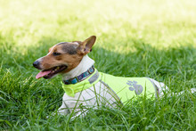 Dog Wearing Safety Reflecting Light Vest