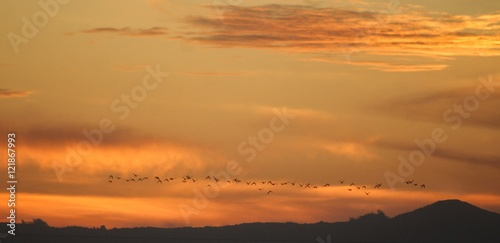 Birds flying at sunset against dramatic sky