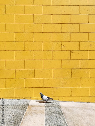 Papiers peints Mur Side View Of A Bird Against Yellow Wall