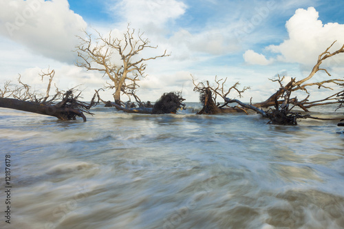 Fotografie, Obraz  fallen trees and fast water