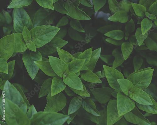 Folhas verdes  Wall mural