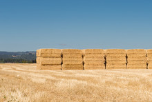 Wheat Straw Bales Stacked In A Field