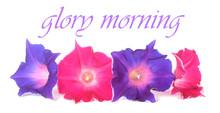 Glory Morning